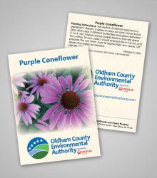 purple-coneflower_wal.jpg
