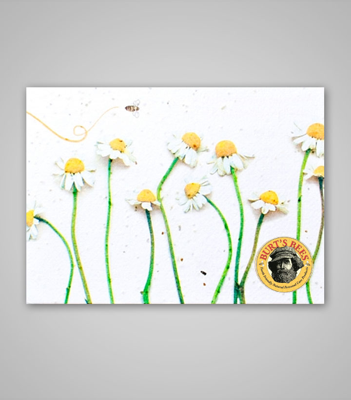 seed-paper-postcard-PSP-4x5-B.jpg